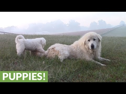 Dog and puppy play in front of majestic scenery