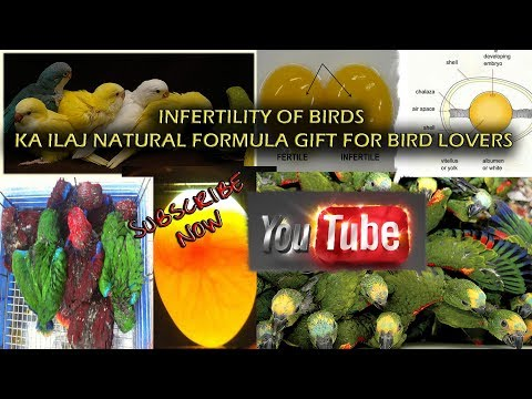 infertility-of-birds-ka-ilaj-natural-formula-gift-for-bird-lovers
