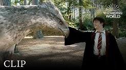 Meet Buckbeak   Harry Potter and the Prisoner of the Azkaban