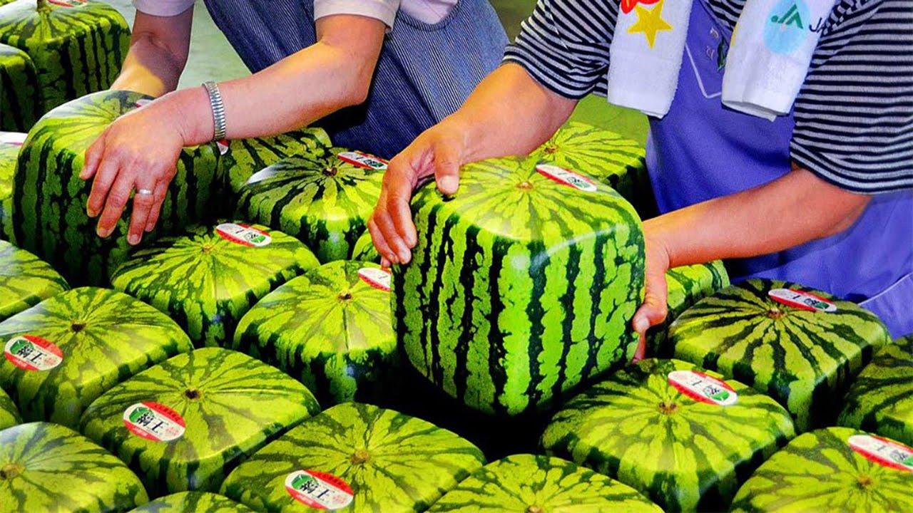 Weird Fruits Of The World 9