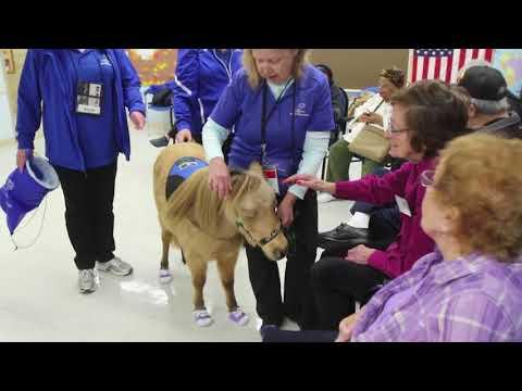 Miniature horses help elderly