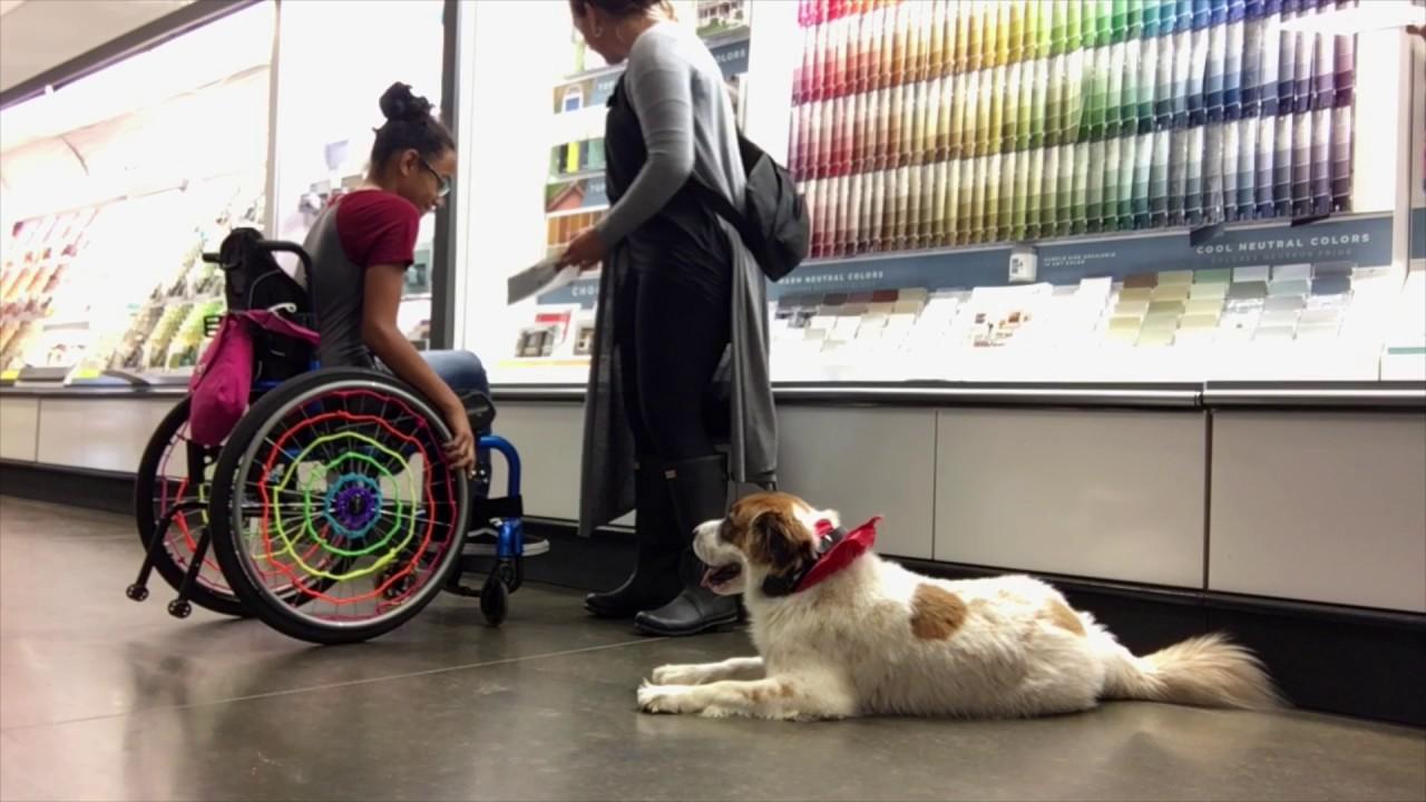 4-Year Old St  Bernard Mix, Hudson! St  Bernard Dog Training | Off Leash K9  Training
