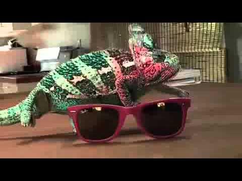 9 как хамелеон меняет цвет