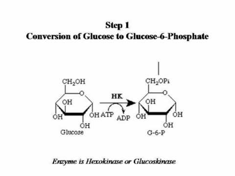 Glycolysis For Dummies