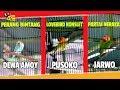 Solo Vaganza Cup  Perang Bintang Lovebird Jarwo Pusoko Dewa Amoy Di Partai Neraka  Mp3 - Mp4 Download