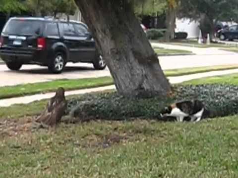 Cat Kills Dog Youtube