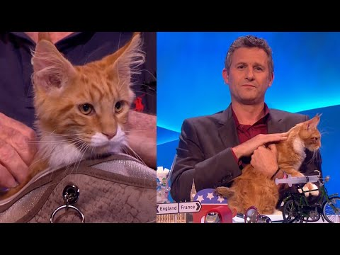 Turning John Cleese's Cat 'Francis' Into A Celebrity - The Last Leg