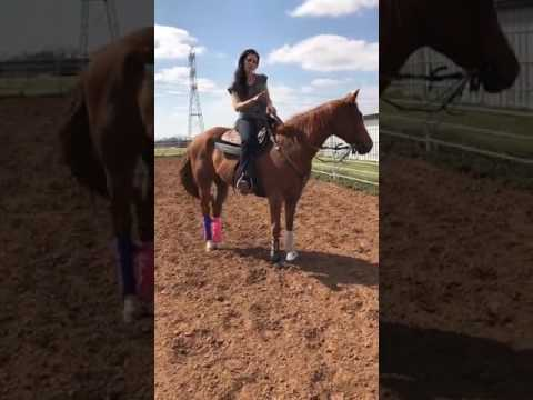 How to teach your horse to pick up leads SIMPLY!