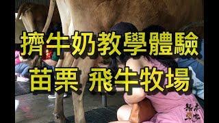 擠牛奶教學體驗|苗栗通霄 飛牛牧場|乳牛媽媽的家