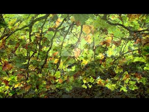 Autumn Leaves: The Bill Evans trio 1959