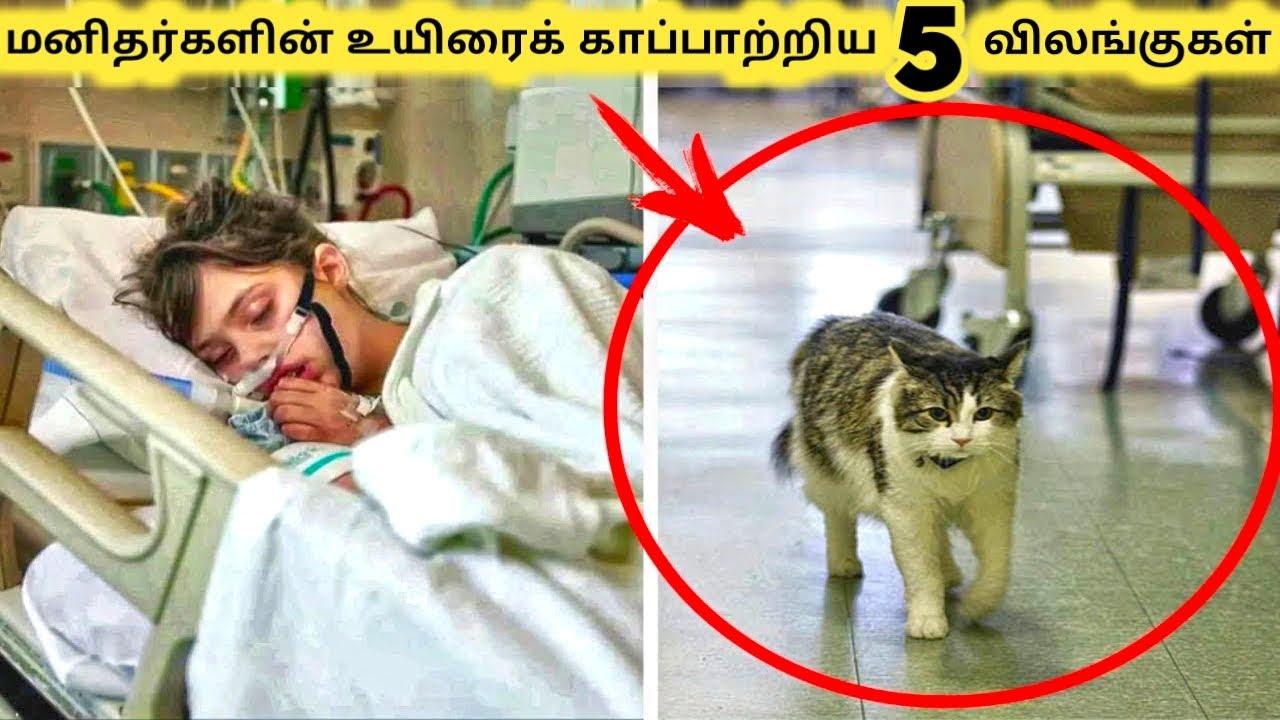 காப்பாற்றிய விலங்குகள் || Animal Save Human Life || Tamil Galatta News