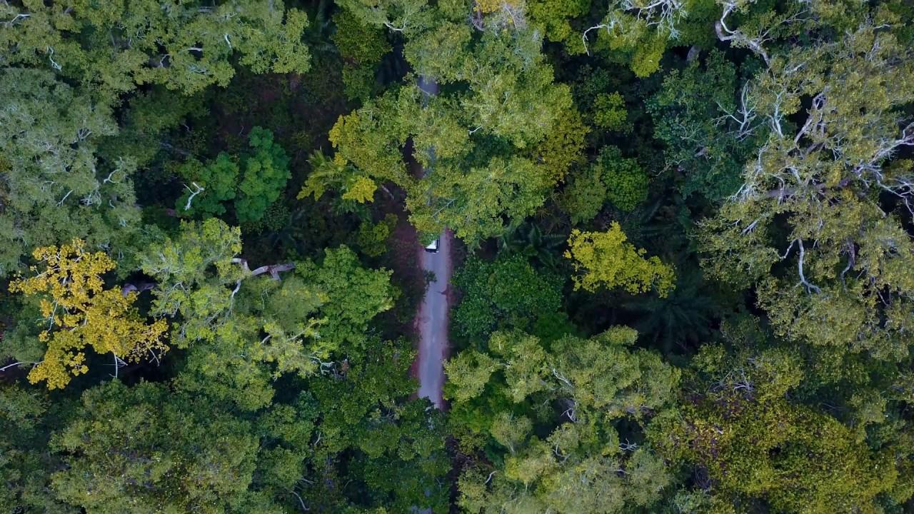 Ngezi rainforest