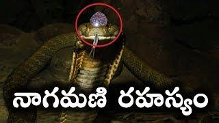 పాము తలలో నాగమణి ఉంటుందా || Mystery Behind Naga Mani || T Talks