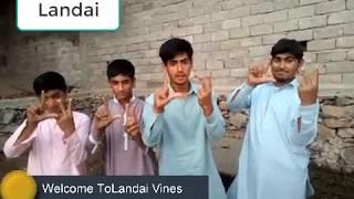 Don  Number 1 of Landai Vines|| Pashton Vines|| Our Vines||