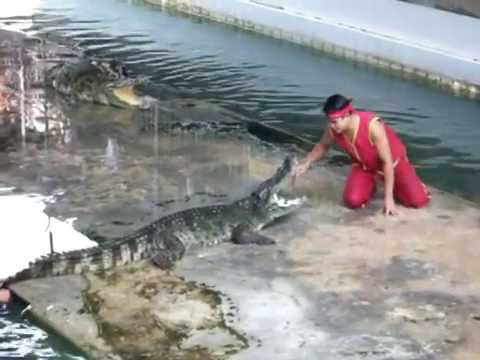 Unexpected accident at crocodile show