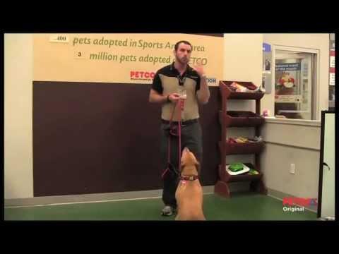 how-petco-positive-training-methods-work