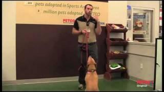 How Petco Positive Training Methods Work