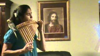 The Trees of the Field Panpipes