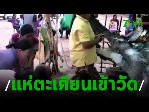 แห่ต้นตะเคียนเข้าวัด ส่องหาเลขเด็ด | 16-08-62 | ข่าวเที่ยงไทยรัฐ