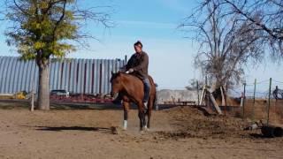 Celebrity Apprentice QH Stallion Liberty Reining | Jessica Dennison