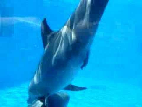Dolphin's Mating - YouTube  Dolphin's M...