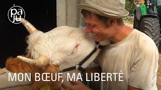«Mon bœuf, ma liberté » ou l'incroyable histoire d'amour entre un homme et un bœuf