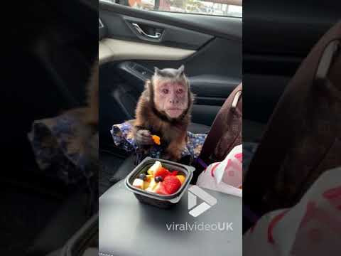 WOR Tonight with Joe Concha - Monkey Loves Her Fruit Cup