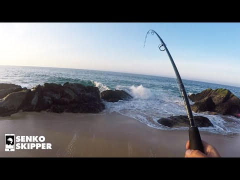 Hooking HUGE Mysterious fishes while beach fishing!