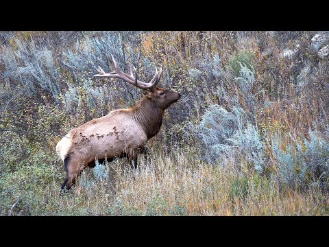 Elk Study - NDGNF