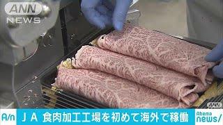和牛を世界に JAが海外初の食肉加工工場を米で稼働(18/03/22) thumbnail