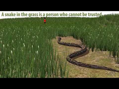 British English Idiom Snake in the Grass - Learn English