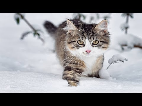 Funny Cats and kittens playing in SNOW - funny fails videos FFV