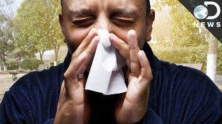 Why Do We Sneeze?