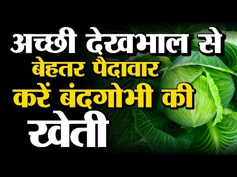 Cabbage Farming (बंदगोभी की खेती) 2 In Baatein Kheti Ki - On Green TV