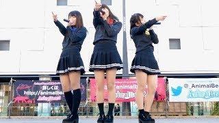 2017.12.3 D'×AnimalBeast presents 集え!Animal Park!! 姫路駅北にぎ...
