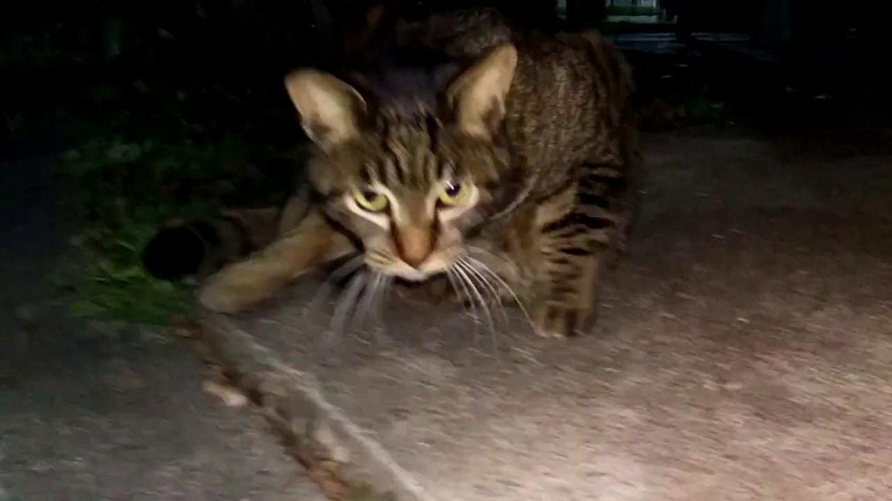 真冬の野良猫!たまちゃんが真夜中の公園で・・・・