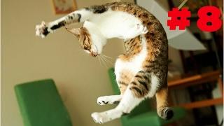 ПРИКОЛЫ С КОТАМИ СМЕШНЫЕ КОТЫ  ТОПовая ПОДБОРКА  #8 Невероятные  падения котов