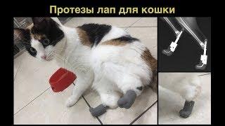 Протезирование двух лап у кошки после ампутации и оценка через 18 месяцев