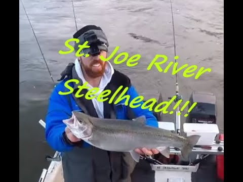 Steelhead Berrien Springs Dam Michigan