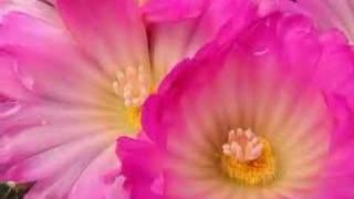 Desert  Garden Conservatory - The Huntington