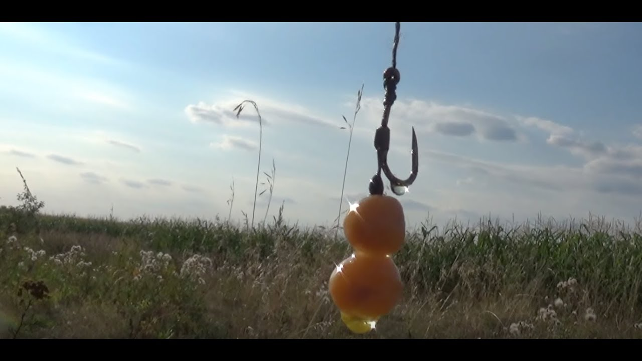 Ловля карпа в августе\Горох рулит\Рыбалка с ночевкой\