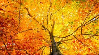 Peaceful Relaxing Instrumental Music, Meditation, Study Musiic Autumn In New England Tim Janis