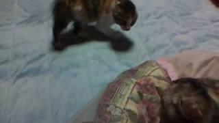 ルナに果敢に挑もうとするマイコです。2010.5.19撮影.