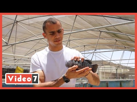 تقنية جديدة فى الزراعة .. عبد الرحمن بيزرع الريحان من مياه السمك  - 17:57-2021 / 6 / 21