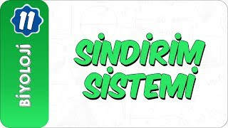 11. Sınıf Biyoloji  Sindirim Sistemi
