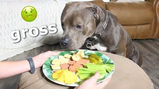 ASMR Dog Reviews Different Types of Food! | Big Blue Chunk