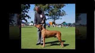 Perth Rhodesian Ridgeback Club Championship Show 2011 Rrcwa