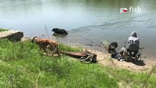 Рыбалка часть 3 Соревнования по фидерной ловле 1 тур Уссурийск Солдатское озеро 2021