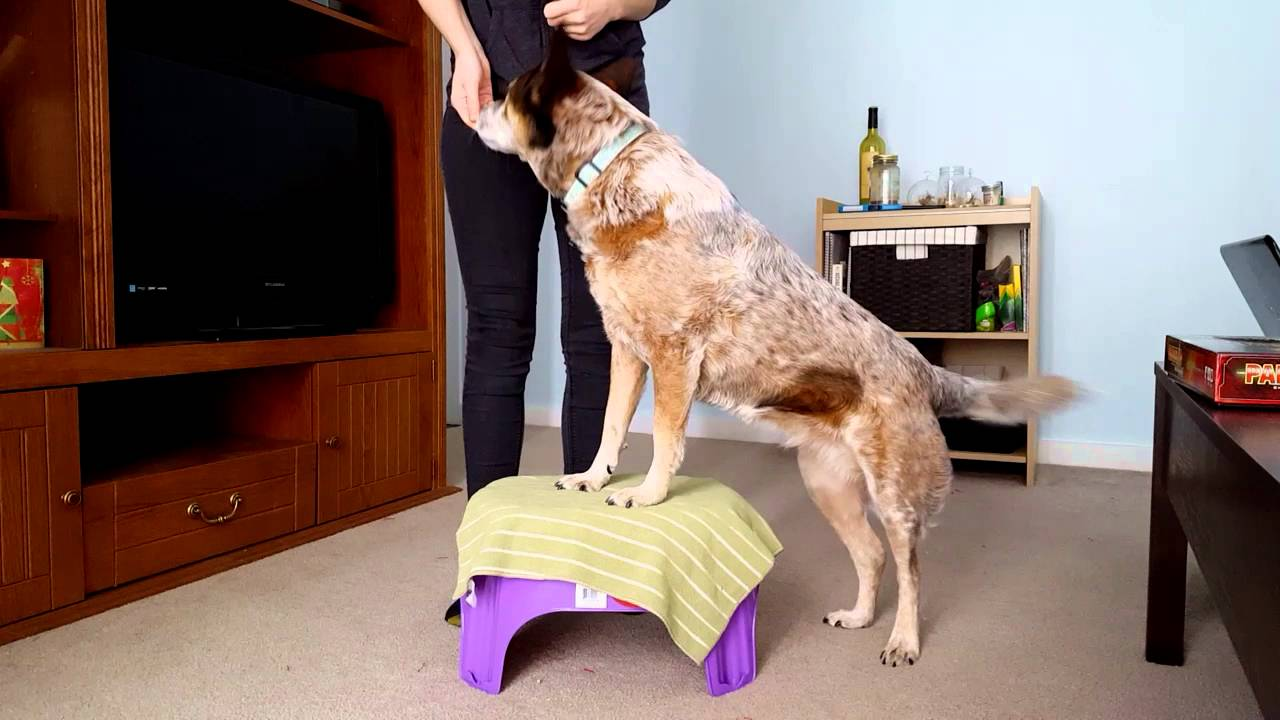 Hind Leg Weakness: When Your Dog's Back Legs Give Out