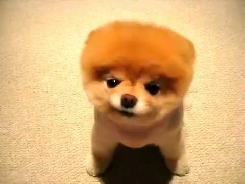 Nowoczesna architektura Najsłodszy pies na świecie ! - YouTube IL98